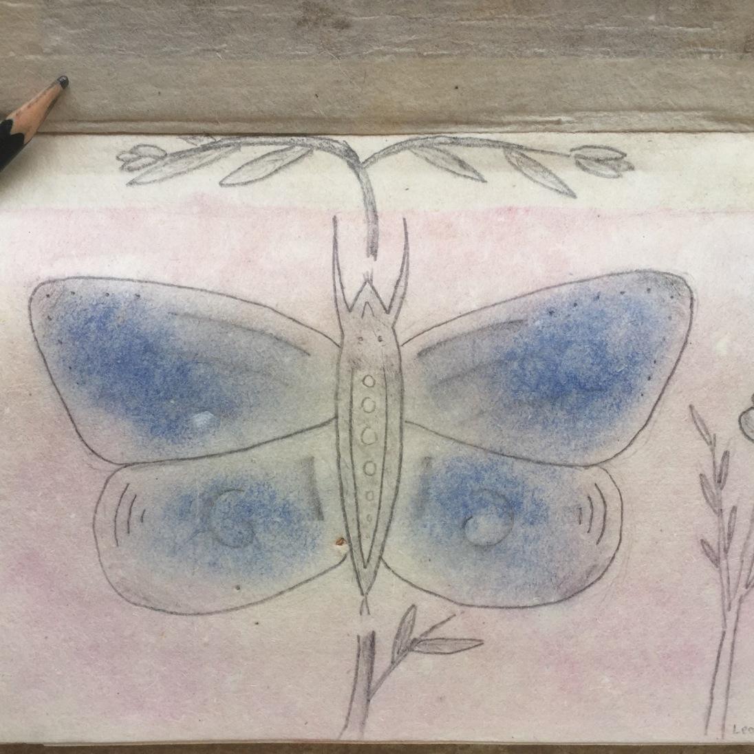 Butterfly 🦋 love